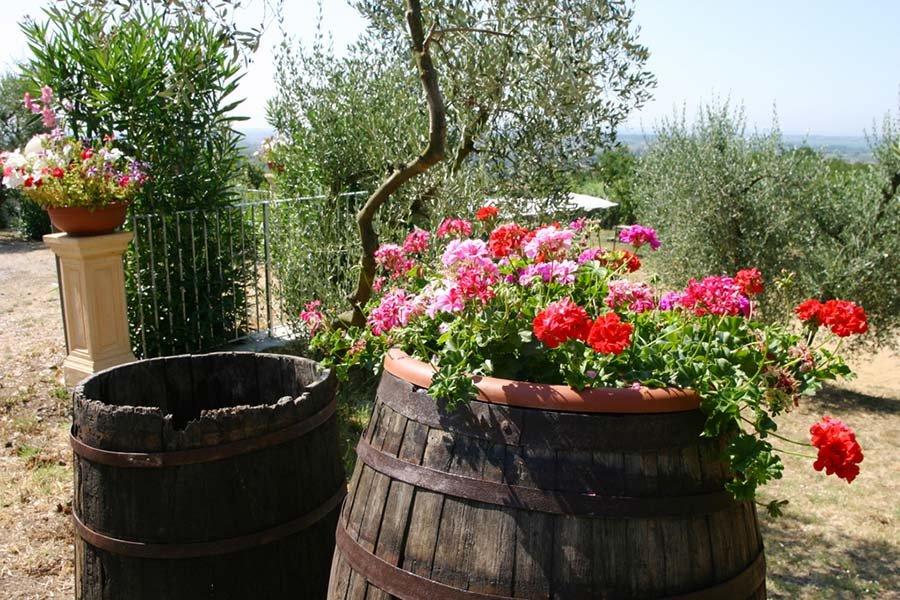 Collina Toscana Resort Agriturismo - Particolare